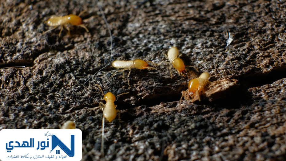 شركة مكافحة حشرات بحي الربيع